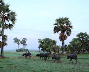 Destination: Svay Rieng